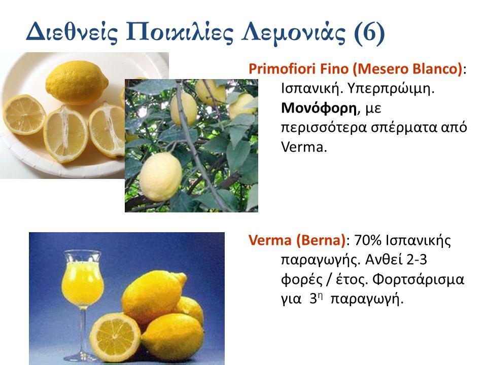 Διεθνείς Ποικιλίες Λεμονιάς (6)