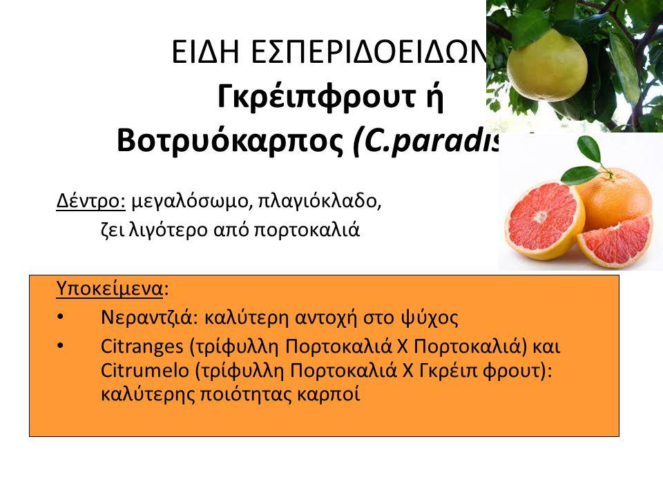 ΕΙΔΗ ΕΣΠΕΡΙΔΟΕΙΔΩΝ Γκρέιπφρουτ ή Βοτρυόκαρπος (C.paradisii):