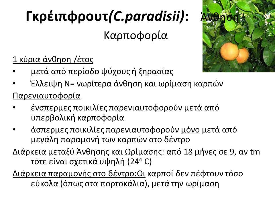 Γκρέιπφρουτ(C.paradisii): Άνθηση - Καρποφορία
