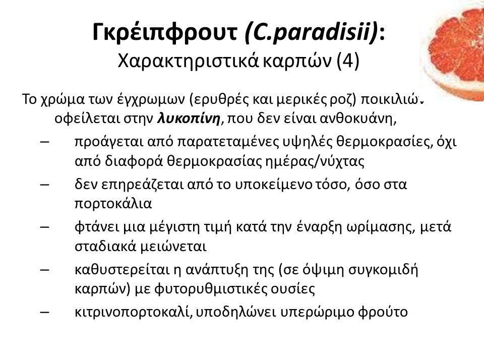 Γκρέιπφρουτ (C.paradisii): Χαρακτηριστικά καρπών (4)