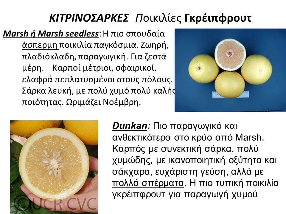 ΚΙΤΡΙΝΟΣΑΡΚΕΣ Ποικιλίες Γκρέιπφρουτ