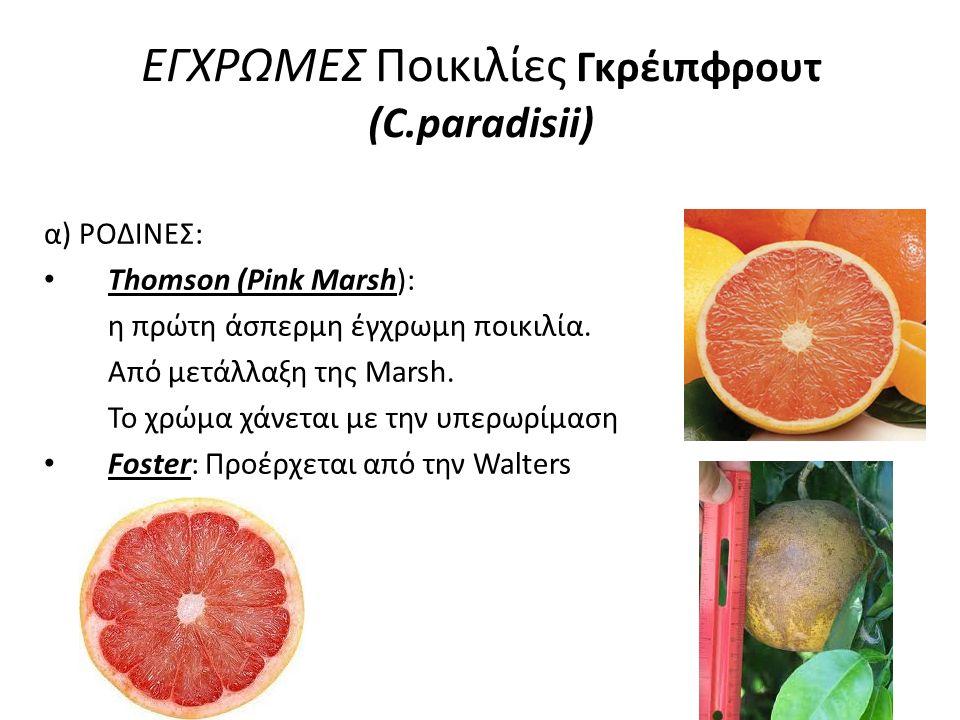 ΕΓΧΡΩΜΕΣ Ποικιλίες Γκρέιπφρουτ (C.paradisii)