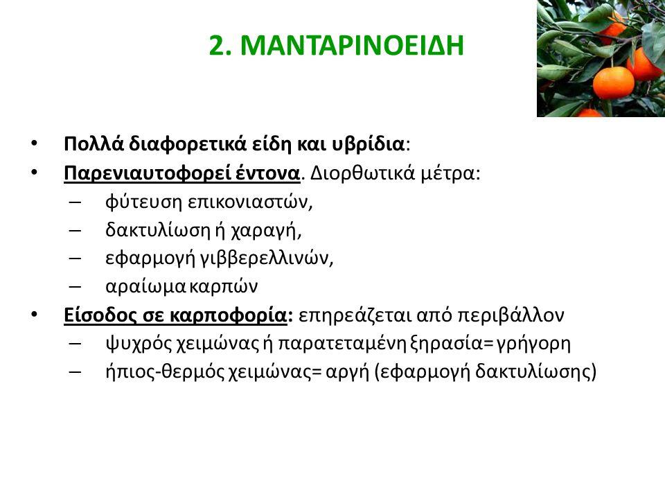 2. ΜΑΝΤΑΡΙΝΟΕΙΔΗ Πολλά διαφορετικά είδη και υβρίδια: