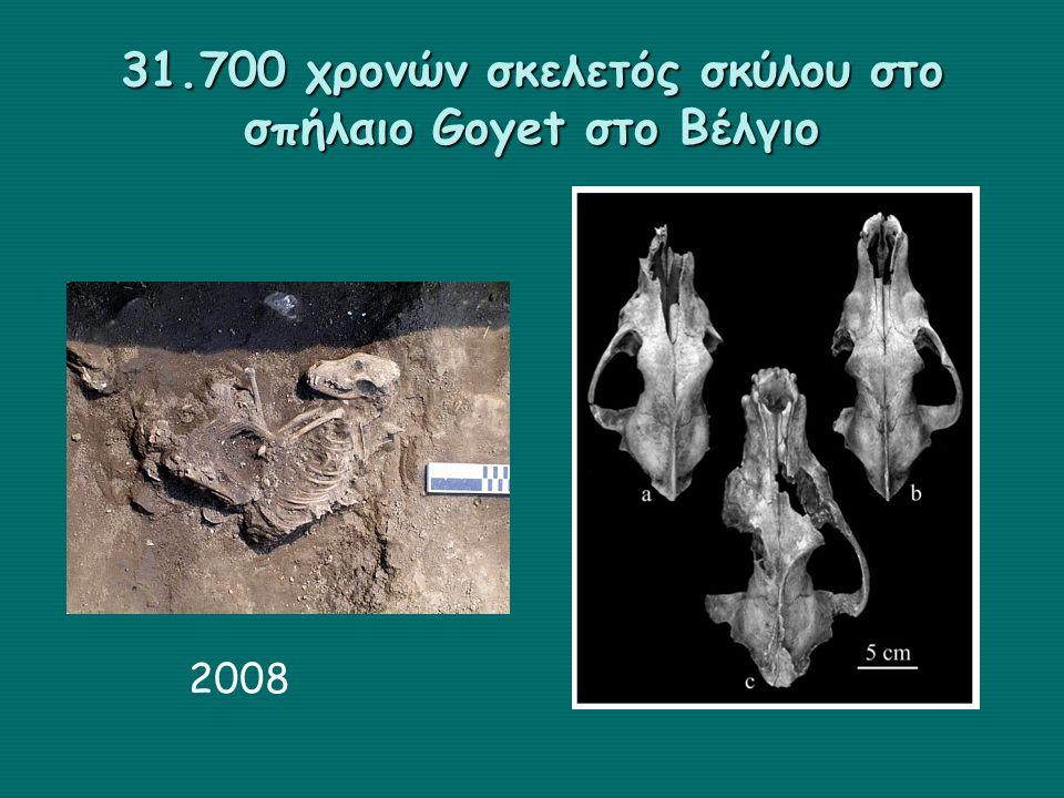 31.700 χρονών σκελετός σκύλου στο σπήλαιο Goyet στο Βέλγιο