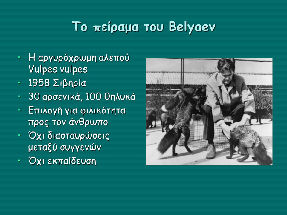 Το πείραμα του Belyaev Η αργυρόχρωμη αλεπού Vulpes vulpes 1958 Σιβηρία