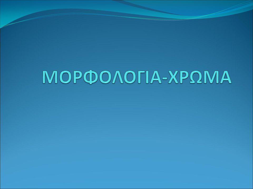 ΜΟΡΦΟΛΟΓΙΑ-ΧΡΩΜΑ