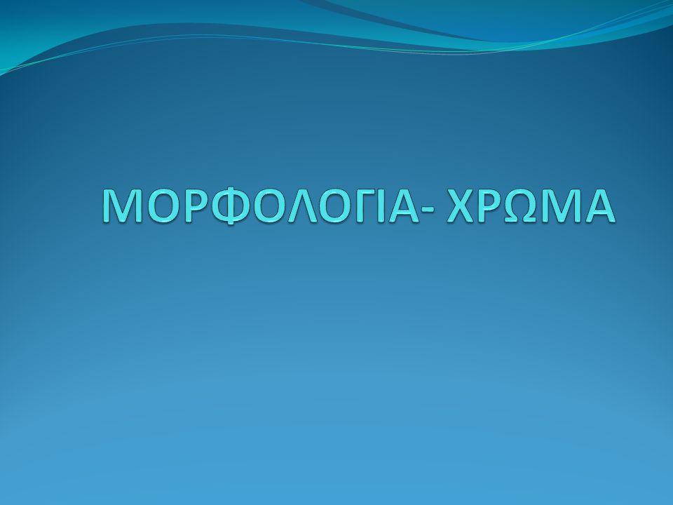 ΜΟΡΦΟΛΟΓΙΑ- ΧΡΩΜΑ