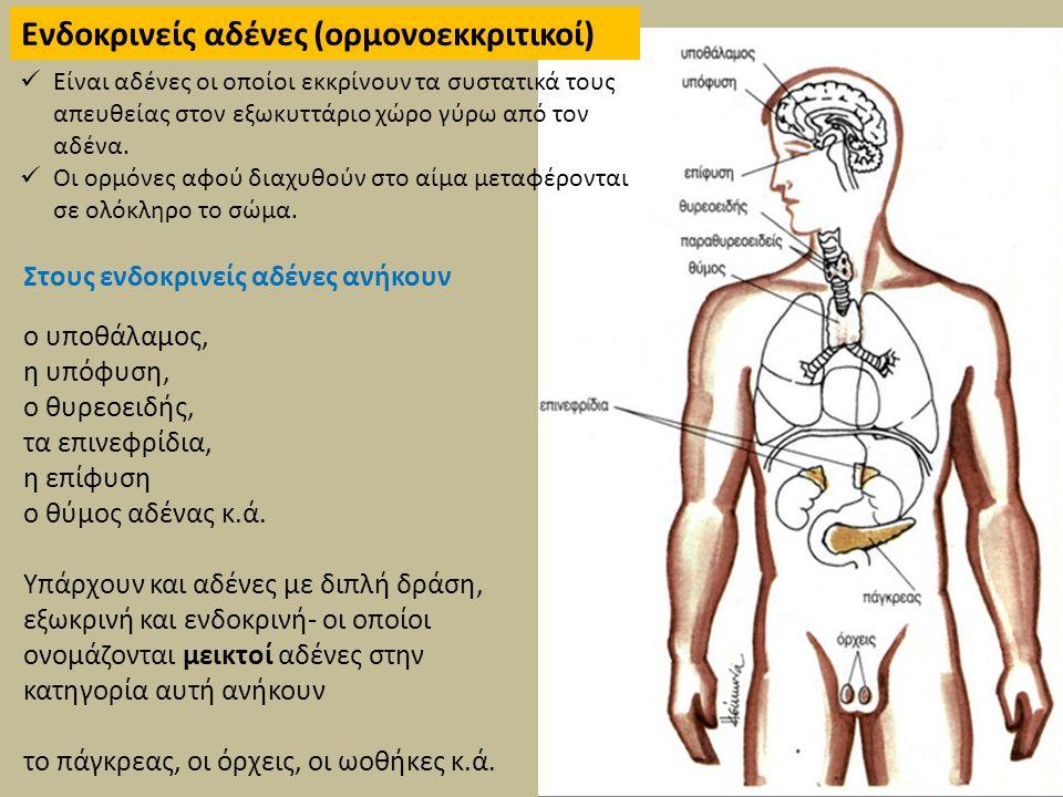Ενδοκρινείς αδένες (ορμονοεκκριτικοί)