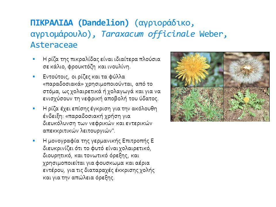 ΠΙΚΡΑΛΙΔΑ (Dandelion) (αγριοράδικο, αγριομάρουλο), Taraxacum officinale Weber, Asteraceae