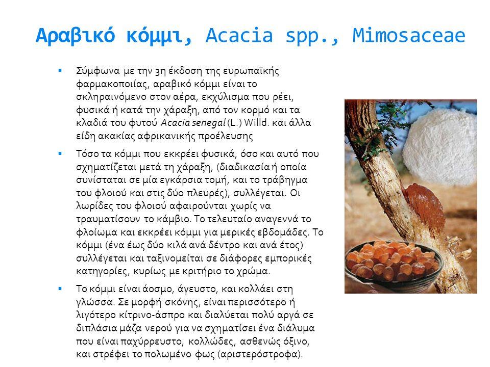 Αραβικό κόμμι, Acacia spp., Mimosaceae
