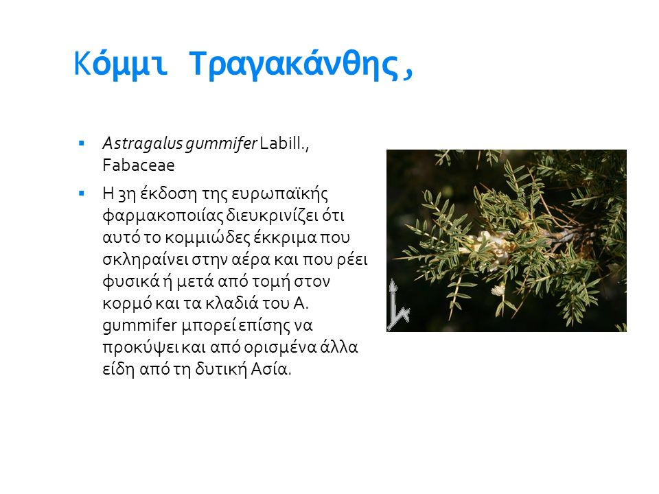 Kόμμι Τραγακάνθης, Astragalus gummifer Labill., Fabaceae