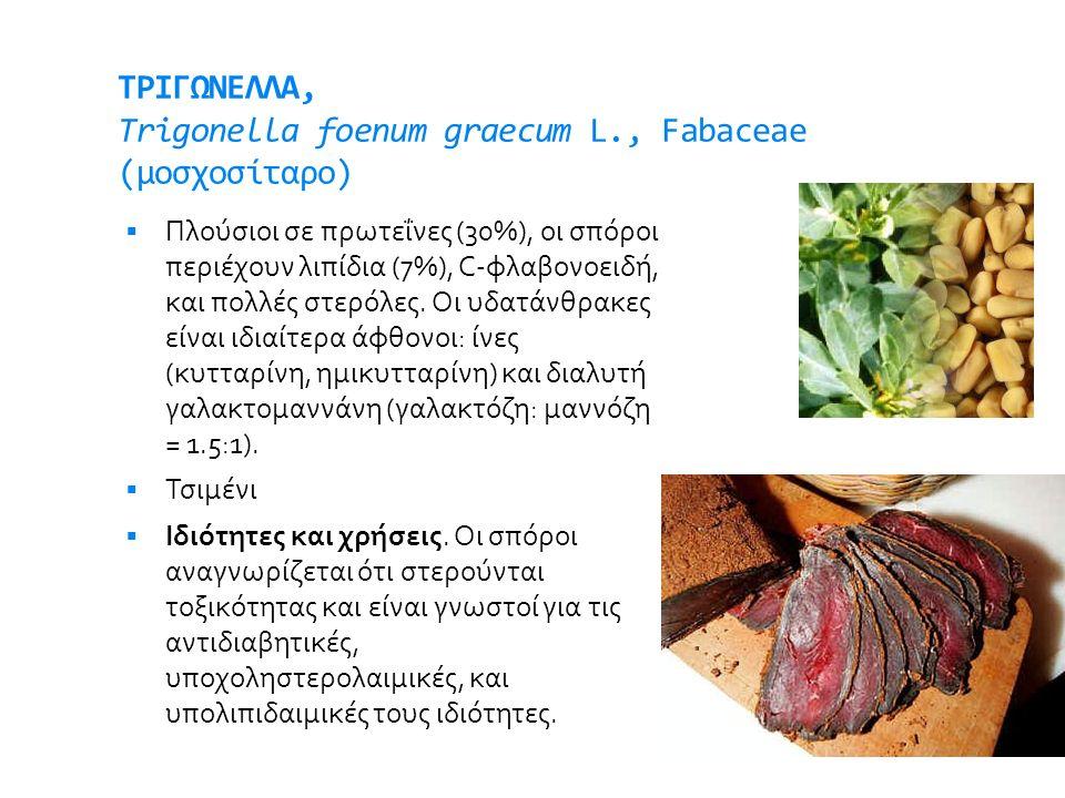 ΤΡΙΓΩΝΕΛΛΑ, Trigonella foenum graecum L., Fabaceae (μοσχοσίταρο)