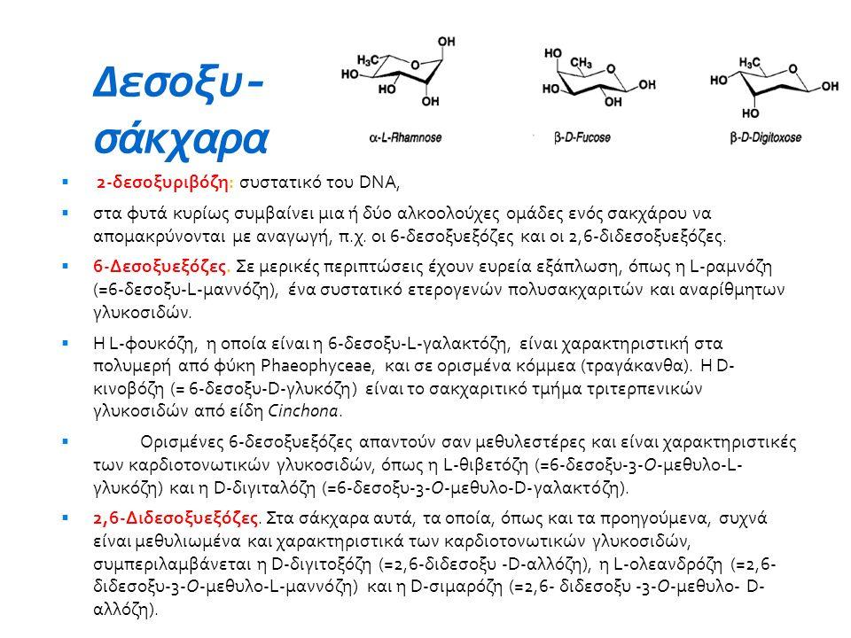 Δεσοξυ- σάκχαρα 2-δεσοξυριβόζη: συστατικό του DNA,