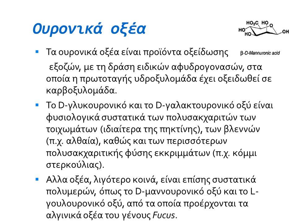 Ουρονικά οξέα Τα ουρονικά οξέα είναι προϊόντα οξείδωσης