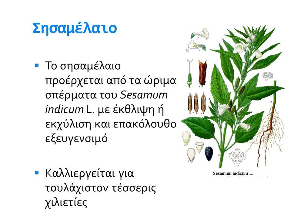 Σησαμέλαιο Το σησαμέλαιο προέρχεται από τα ώριμα σπέρματα του Sesamum indicum L. με έκθλιψη ή εκχύλιση και επακόλουθο εξευγενσιμό.