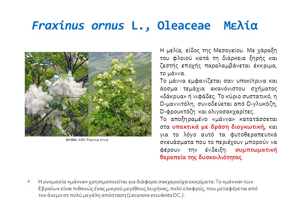 Fraxinus ornus L., Oleaceae Μελία