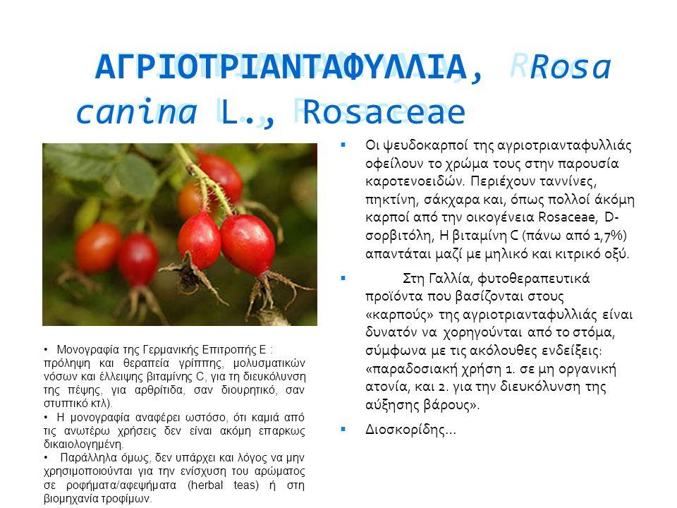 ΑΓΡΙOΤΡΙΑΝΤΑΦΥΛΛΙΑ, Rosa canina L., Rosaceae