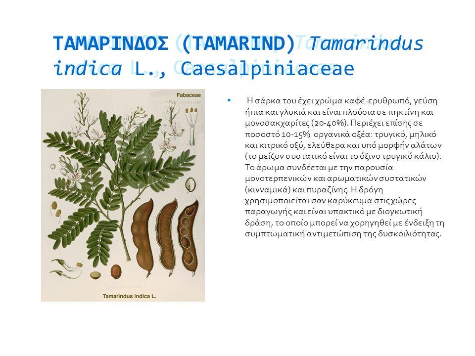 ΤΑΜΑΡΙΝΔΟΣ (TAMARIND) Tamarindus indica L., Caesalpiniaceae