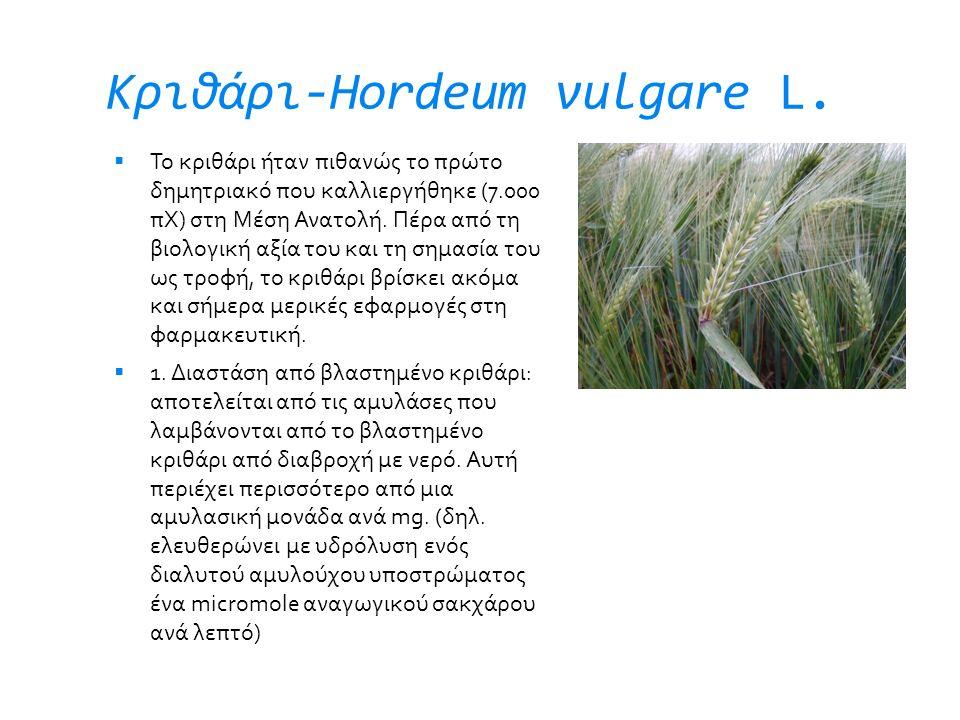 Κριθάρι-Hordeum vulgare L.