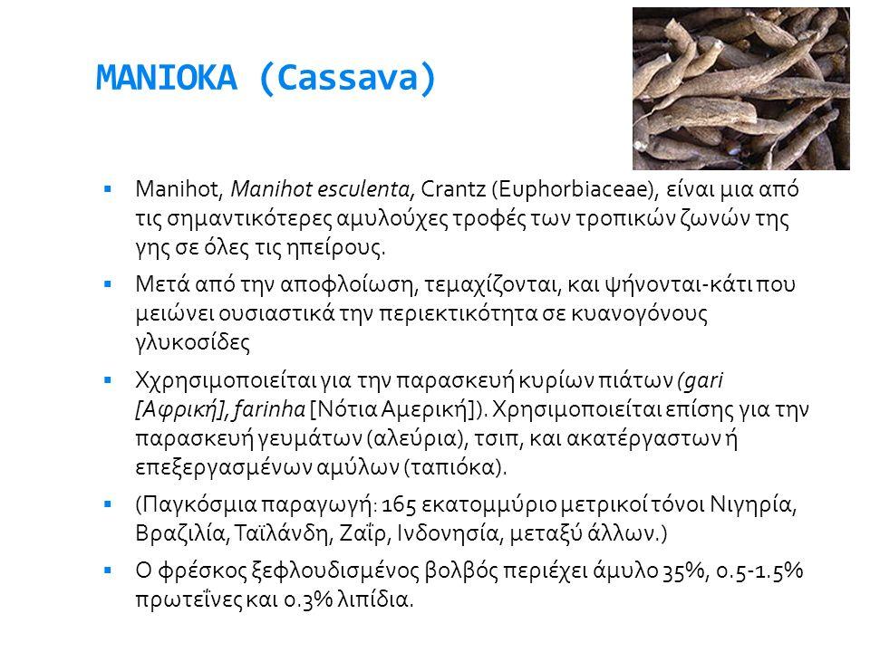 ΜΑΝΙΟΚΑ (Cassava)