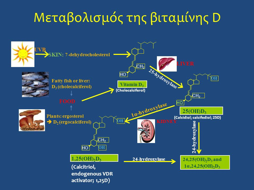 Μεταβολισμός της βιταμίνης D