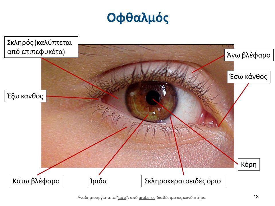 Εξέταση οφθαλμών Συμμετρία οφθαλμών. Βλέφαρα. Επιπεφυκότες. Βολβός.
