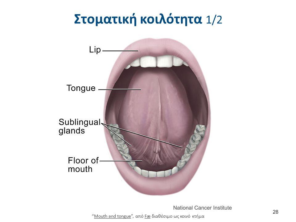 Στοματική κοιλότητα 2/2 Χείλη. Οδόντες. ούλα . Γλώσσα. Υπερώα.
