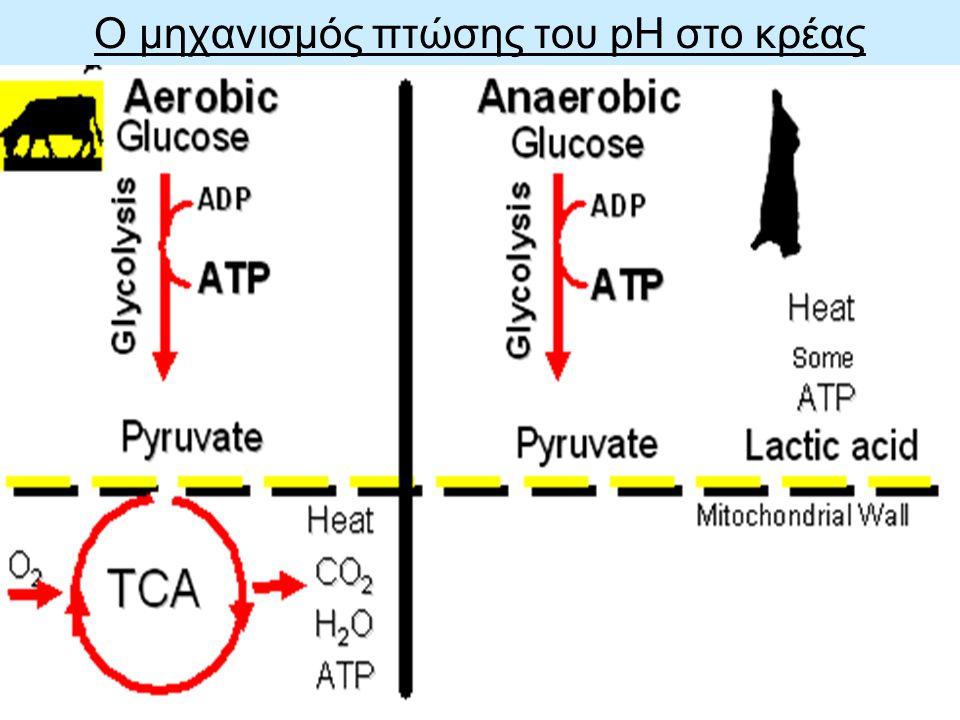 Ο μηχανισμός πτώσης του pH στο κρέας