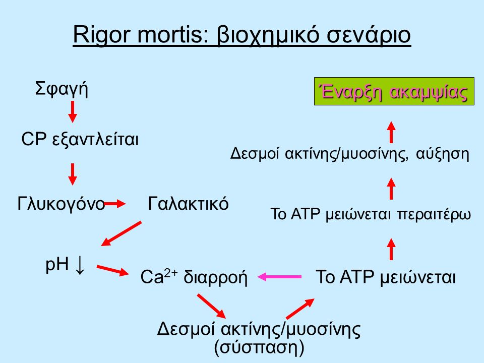 Rigor mortis: βιοχημικό σενάριο