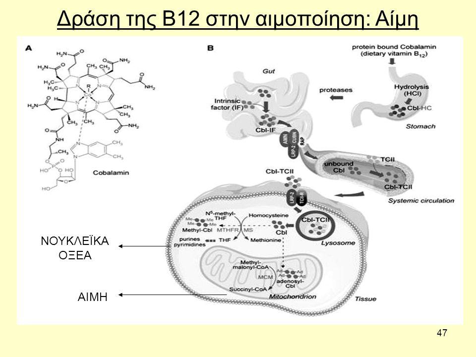 Δράση της Β12 στην αιμοποίηση: Αίμη