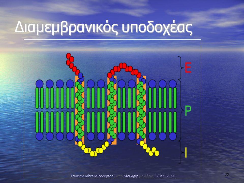 Transmembrane receptor , από Mouagip με άδεια CC BY-SA 3.0
