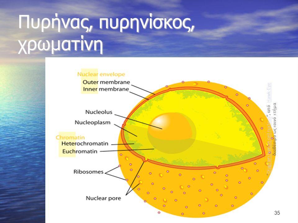 Diagram human cell nucleus , από Hawk-Eye διαθέσιμο ως κοινό κτήμα