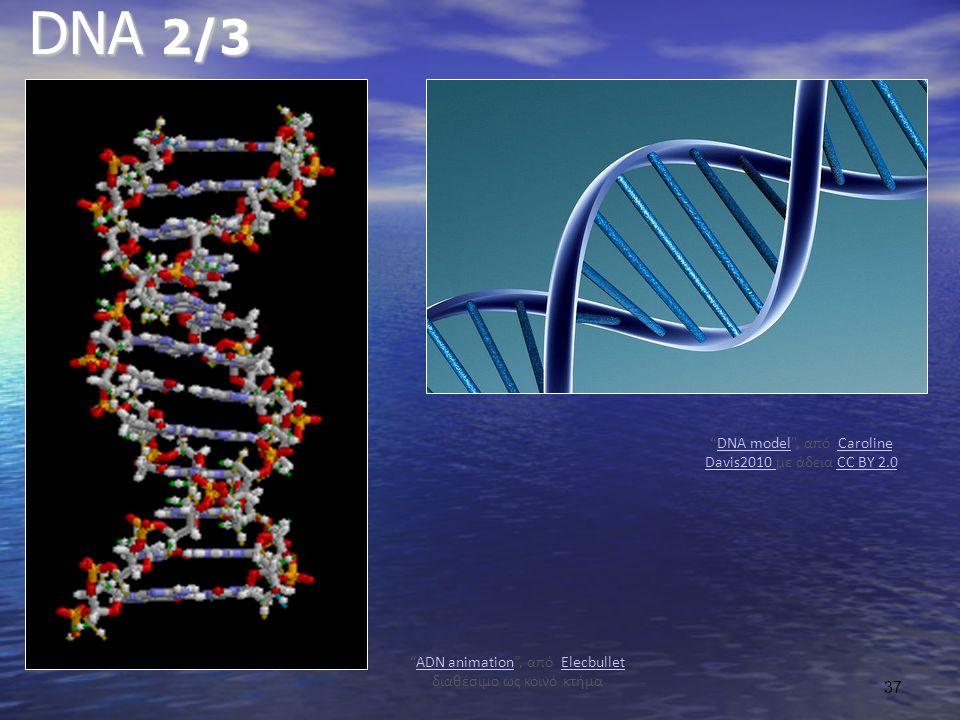 DNA 2/3 DNA model , από Caroline Davis2010 με άδεια CC BY 2.0