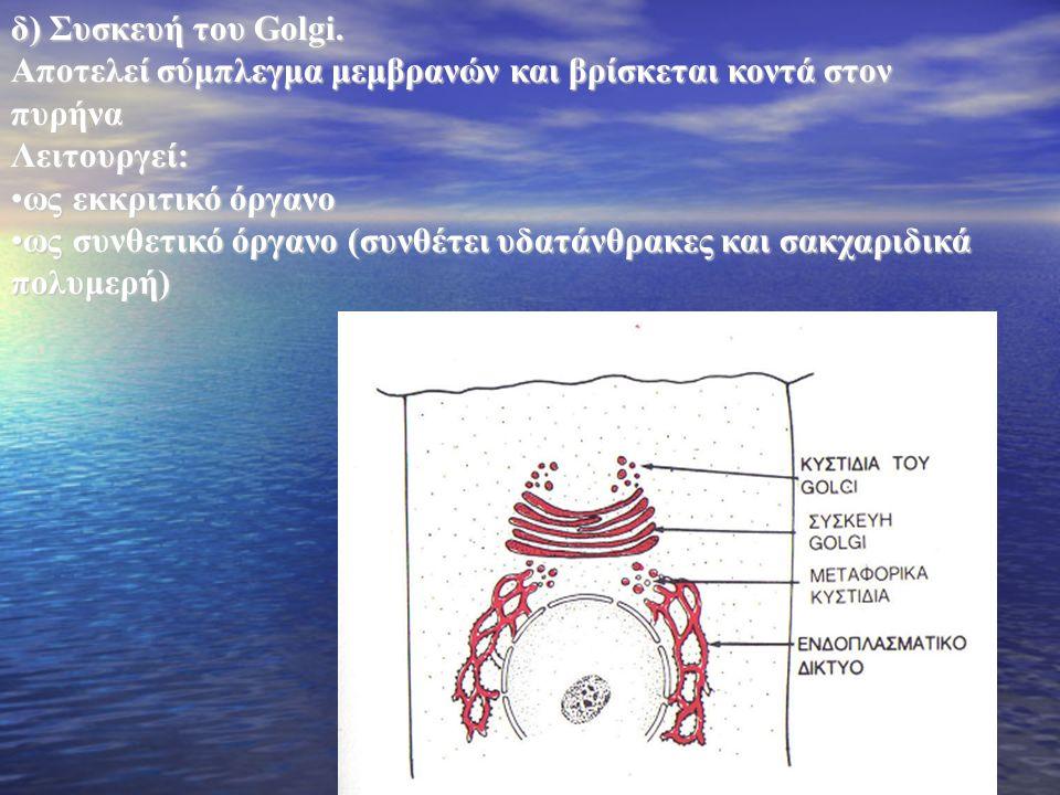 Αποτελεί σύμπλεγμα μεμβρανών και βρίσκεται κοντά στον πυρήνα