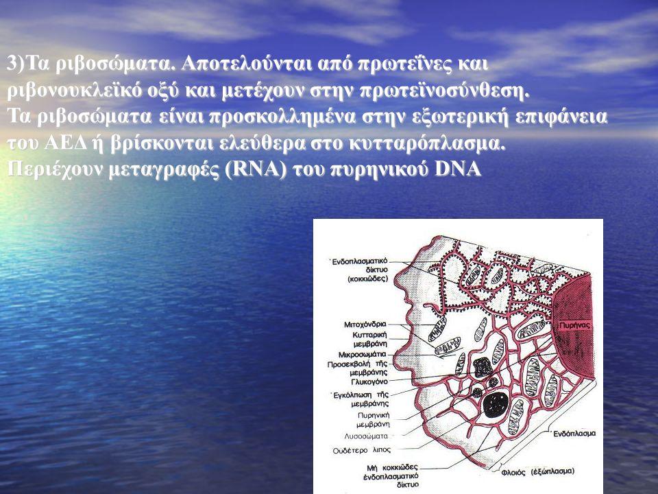 Περιέχουν μεταγραφές (RNA) του πυρηνικού DNA