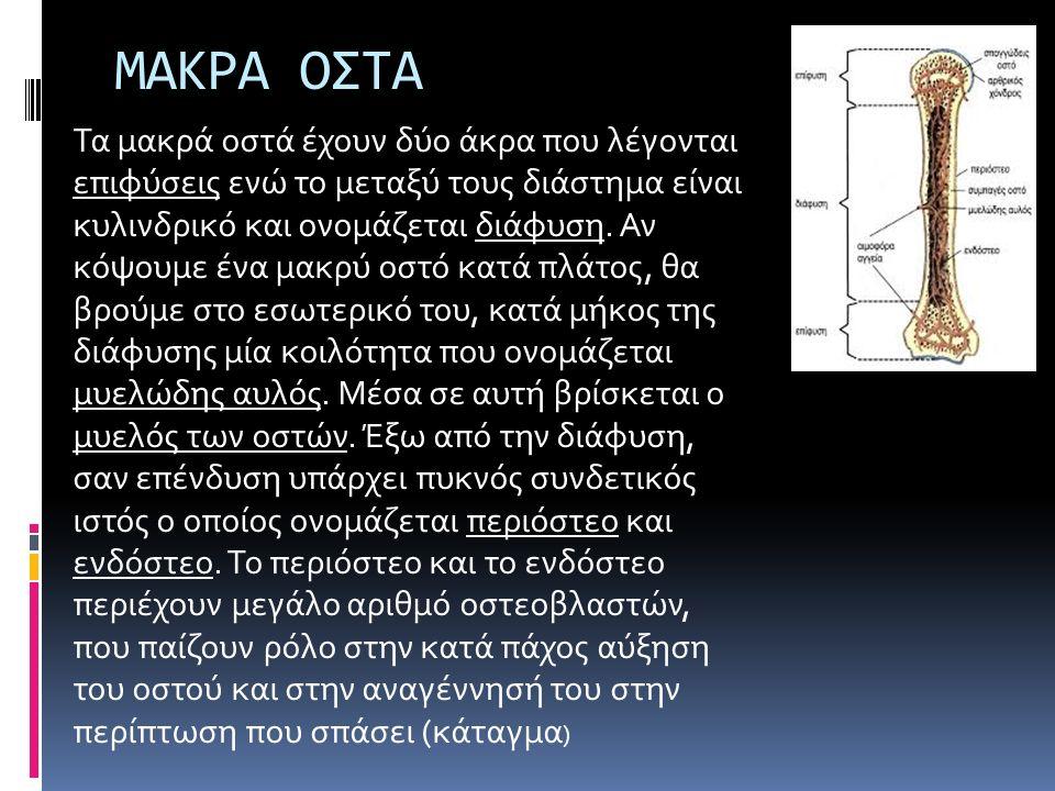 ΜΑΚΡΑ ΟΣΤΑ