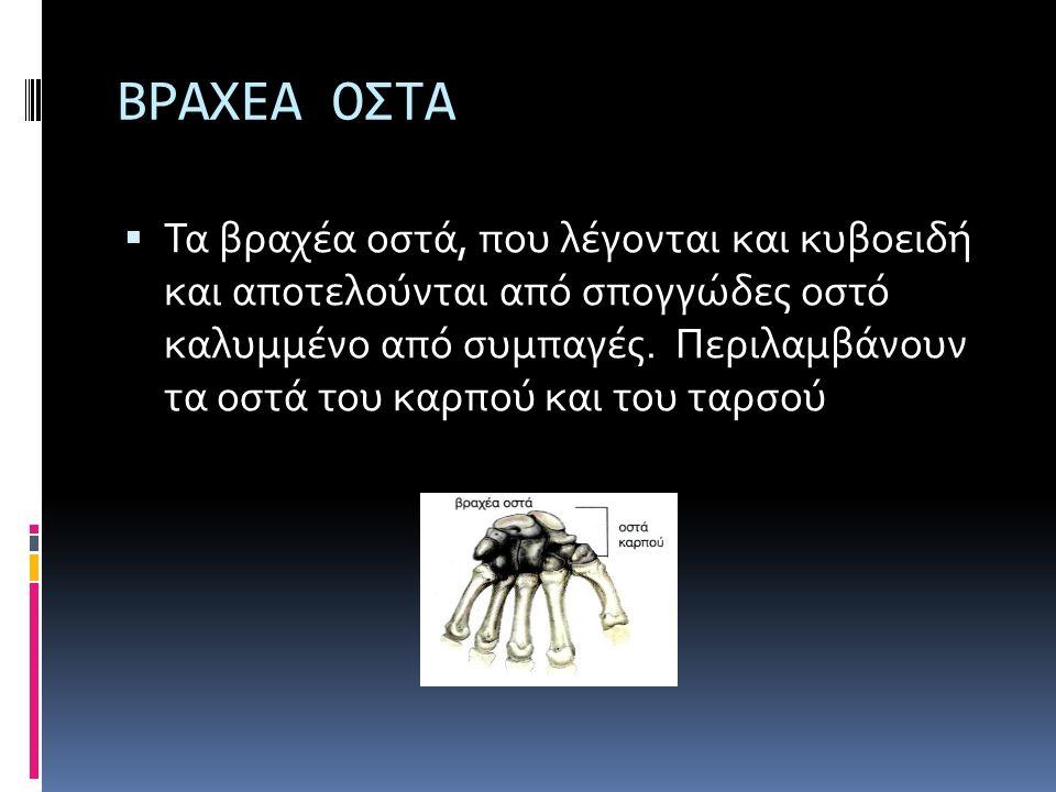 ΒΡΑΧΕΑ ΟΣΤΑ