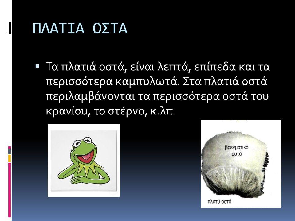 ΠΛΑΤΙΑ ΟΣΤΑ