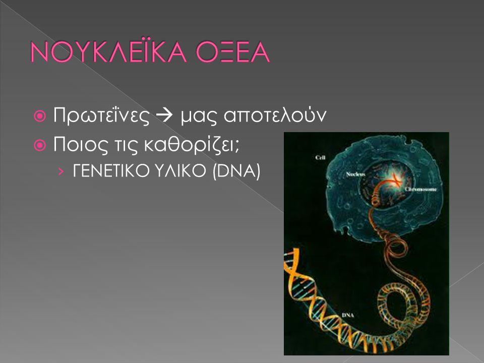 ΝΟΥΚΛΕΪΚΑ ΟΞΕΑ Πρωτεΐνες  μας αποτελούν Ποιος τις καθορίζει;