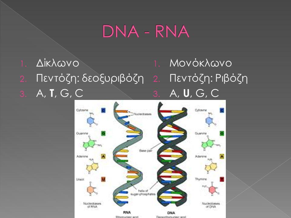 DNA - RNA Δίκλωνο Πεντόζη: δεοξυριβόζη A, T, G, C Μονόκλωνο