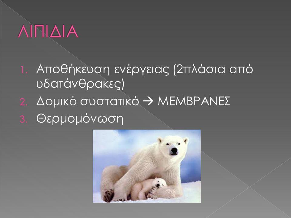 ΛΙΠΙΔΙΑ Αποθήκευση ενέργειας (2πλάσια από υδατάνθρακες)