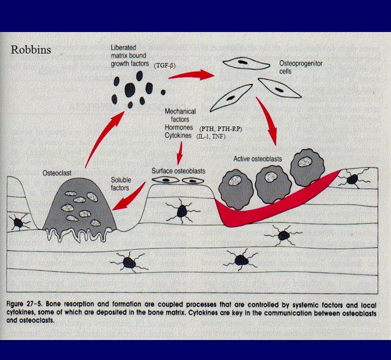 Robbins (TGF-β) (PTH, PTH-RP) (IL-1, TNF)