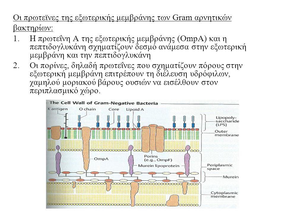 Οι πρωτεϊνες της εξωτερικής μεμβράνης των Gram αρνητικών