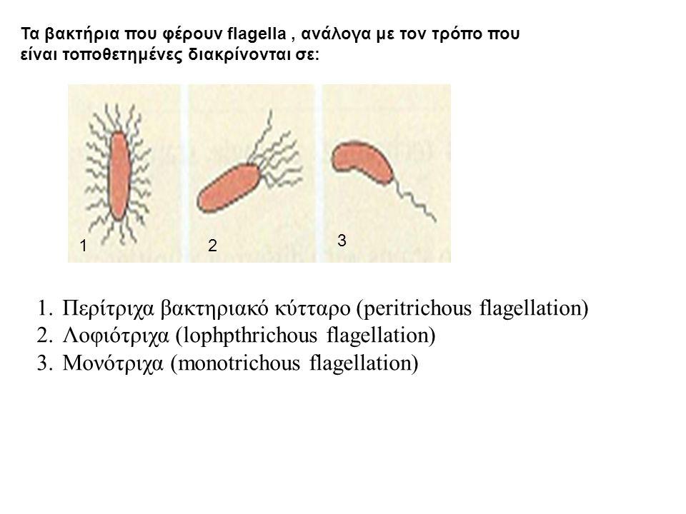 Περίτριχα βακτηριακό κύτταρο (peritrichous flagellation)