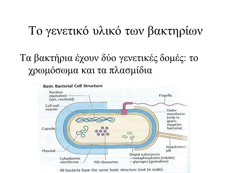 Το γενετικό υλικό των βακτηρίων