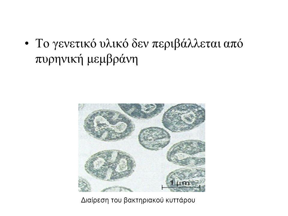 Το γενετικό υλικό δεν περιβάλλεται από πυρηνική μεμβράνη