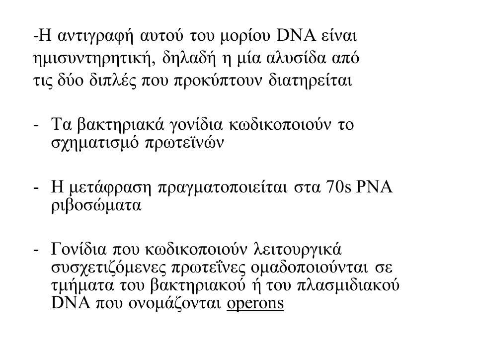 -Η αντιγραφή αυτού του μορίου DNA είναι