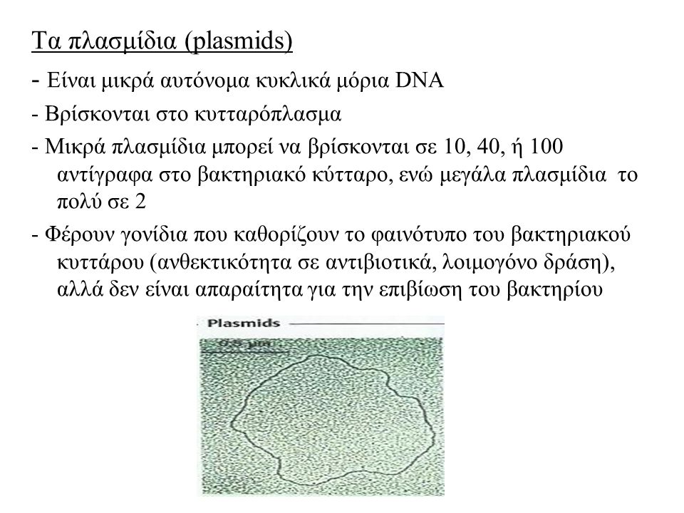 Τα πλασμίδια (plasmids) - Είναι μικρά αυτόνομα κυκλικά μόρια DNA