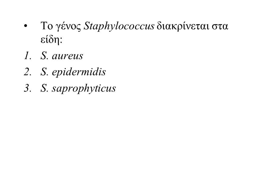Το γένος Staphylococcus διακρίνεται στα είδη:
