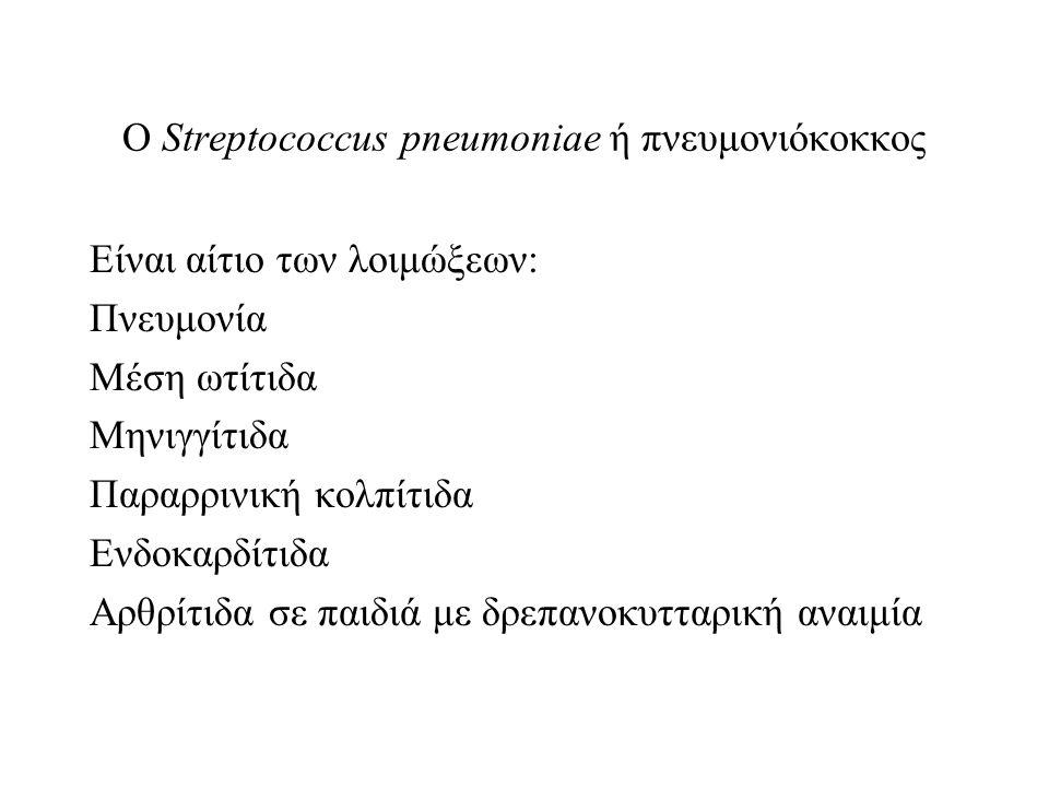Ο Streptococcus pneumoniae ή πνευμονιόκοκκος